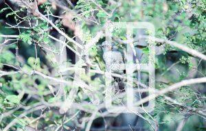 そざい畑,素材畑,カワセミ4