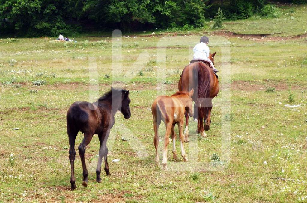 そざい畑,素材畑,馬の親子と小さな子