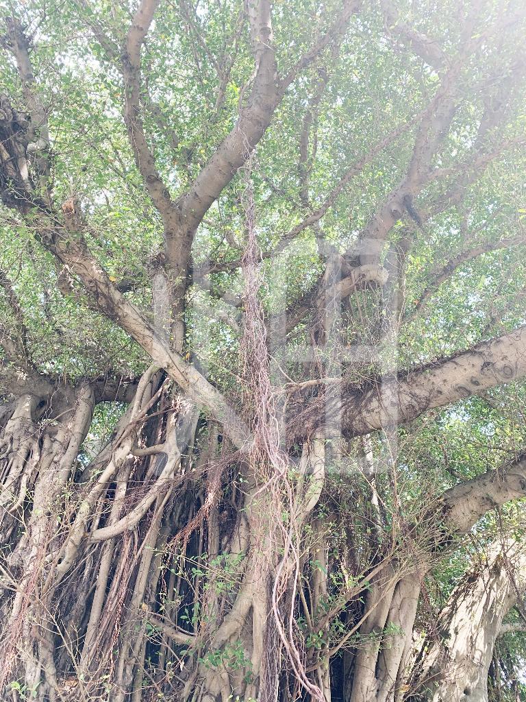 そざい畑,素材畑,沖縄の木