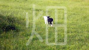 そざい畑,素材畑,子羊