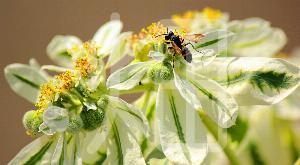 そざい畑,素材畑,花と蜂