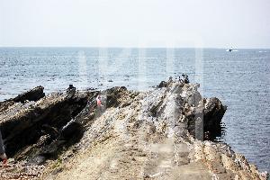 そざい畑,素材畑,城ケ崎海岸