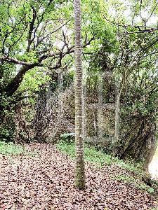 そざい畑,素材畑,沖縄風景4