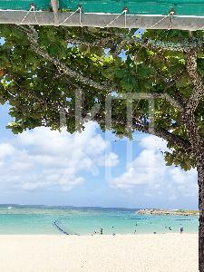 そざい畑,素材畑,沖縄の海1