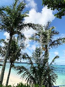 そざい畑,素材畑,沖縄の海2