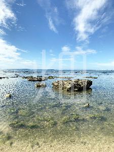 そざい畑,素材畑,沖縄の青い海と空