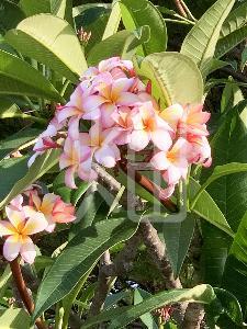 そざい畑,素材畑,沖縄の花木