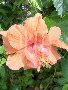 そざい畑,素材畑,沖縄の花